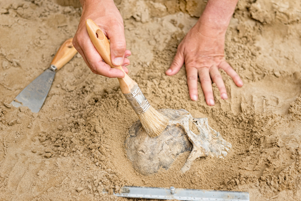 Anthropology - hands of an archeologist revealing human skull from dirt
